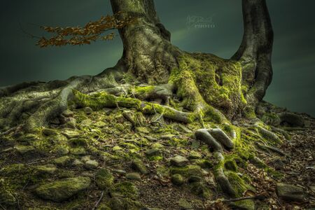 Mysterious forest with stones covered by moss, Czech Republic