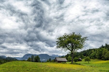 Green meadow with wooden house, big tree and yellow flowers in Julian Alpe, Stara Fuzina, Slovenia