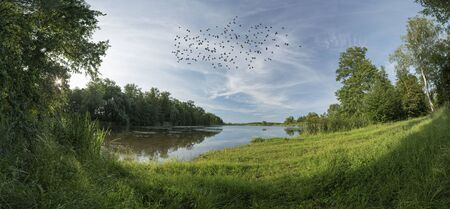 Big pond during summer with birds flock, and green trees around pond, Bohdanec
