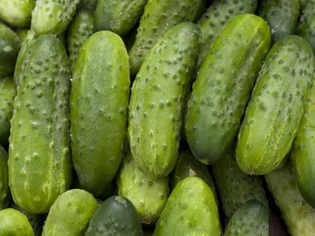 Fresh organic cucumbers ready for pickling Stock Photo