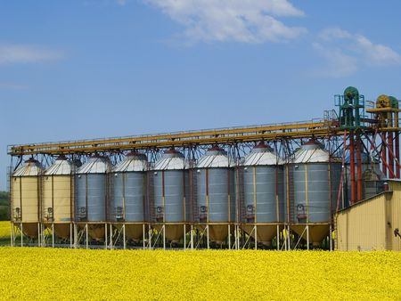 A row of grain silos surrounded by fields of rape photo