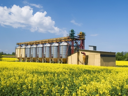 A row of grain silos surrounded by fields of rape Stock Photo - 7749788