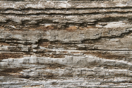 Background image of rotting wood  Stock Photo - 17448280