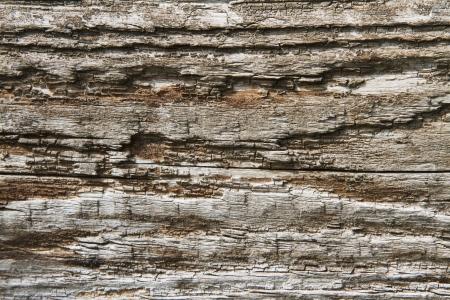 Background image of rotting wood Stock Photo - 17448280