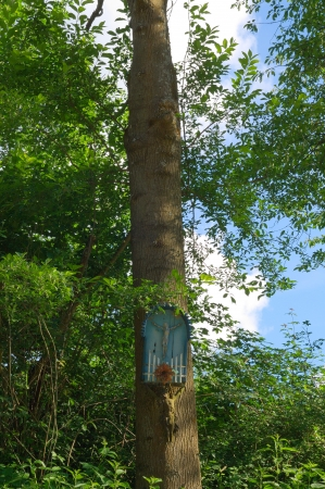 jezus: Shrine in the wood