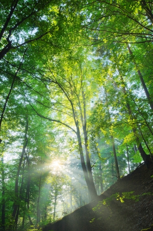 Sun shining on the forest slope  photo