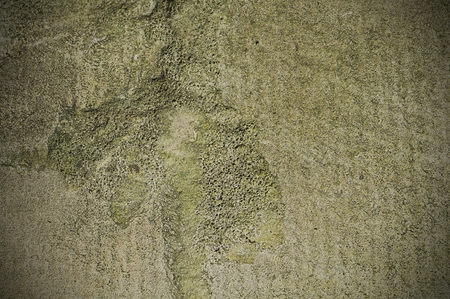 Cement moss texture background pattern photo