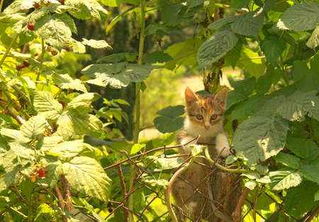 Young cat climbing on the old stake in garden photo