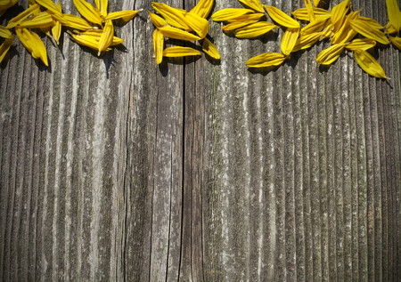 Board wood panel with yellow sunflower petals photo