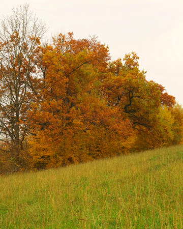 Beauty autumn forest with lmeadow and eaves Stock Photo