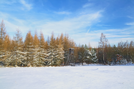 Winter pines larchs forest landscape with hunting house photo