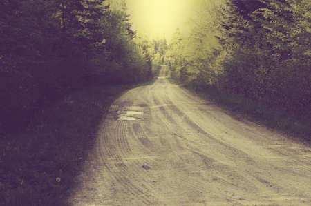 Vintage muddy traces on the forest road in the summer photo