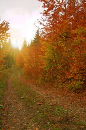 Beauty autumn forest with leaves photo