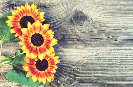 Old boards with sunflowers vintage concept