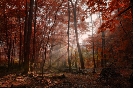 Dawn in the forest with sunbeams photo