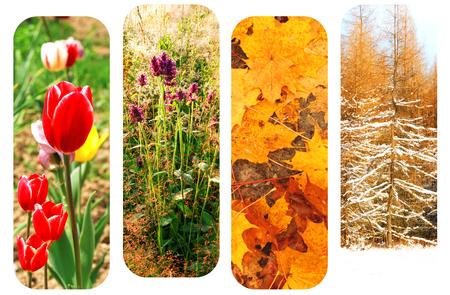 four season: Four season collage spring summer autumn winter