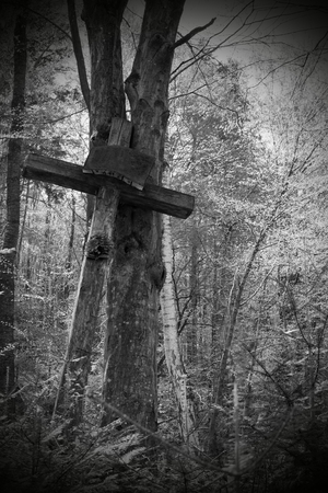 jezus: Old Cross in the wood
