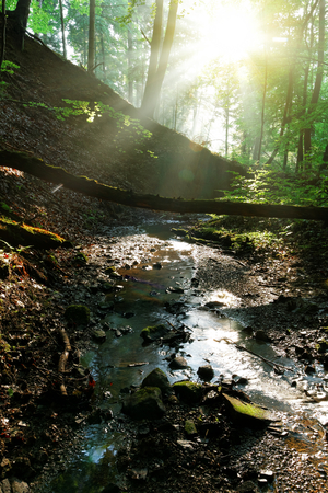 forest stream: Forest stream with sunrays in the morning Stock Photo