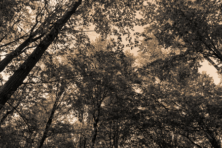 Beauty forest with meadow and grass in the morning light sepia gold toning filter