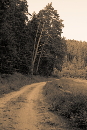 Vintage muddy trace on the forest road in the summer sepia toning gold filter