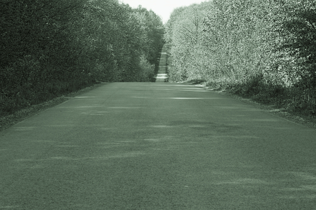 Forest road in the summer light sepia toning