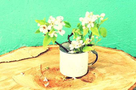 oldschool: Oldschool vintage style cherry and pear branches flowers blossom in the springtime with brown wood boards