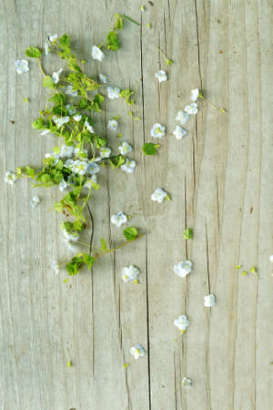 brown background: Oldschool vintage style wild white flowers blossom in the springtime with brown wood boards
