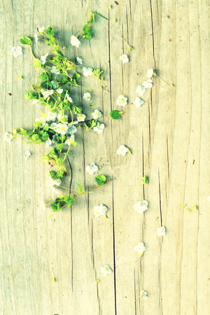 oldschool: Oldschool vintage style wild white flowers blossom in the springtime with brown wood boards