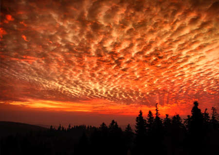 red sky: Hell dramatic dark red sky landscape with black forest Stock Photo