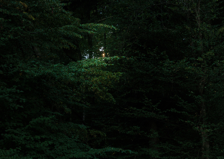 scary forest: Old dark scary forest with moonlight landscape