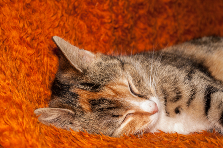 Colorful mottled young cat laying on the bed