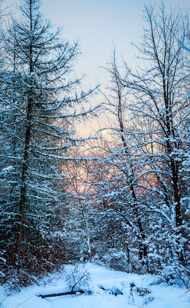 Winter landscape with frozen colorful trees view and sun shining