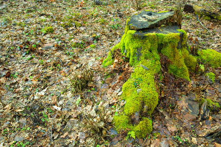Old nature mossy wood trunk in the forest green ecology landscape