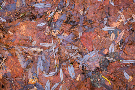 Autumn wet orange and brown leaves  or texture Stock Photo