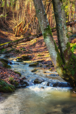Forest landscape with water stream and old moss trees