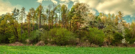 Panoramic view of spring green landscape with blue sky and blossom trees and green meadow