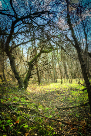Mystery fantasy green forest landscape with old trees Stock Photo
