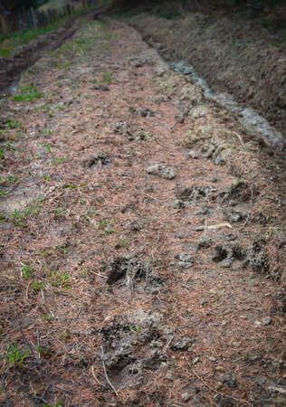 Boar traces on the forest muddy wet road with grass