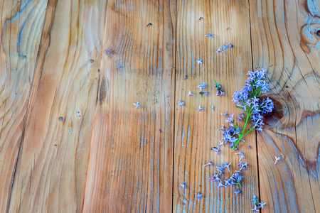 Violet lilac flowers on wooden table with copyspace Stock Photo