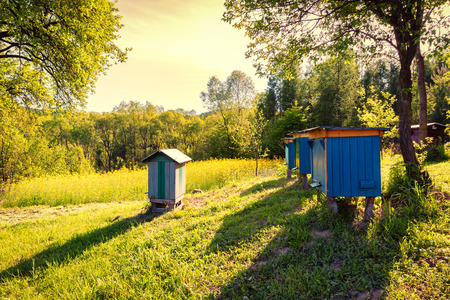 Village landscape with colza field and beehives in the garden springtime Stock Photo