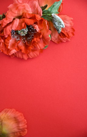 poppy on a red background Imagens