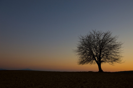 tree on the horizon after sunset