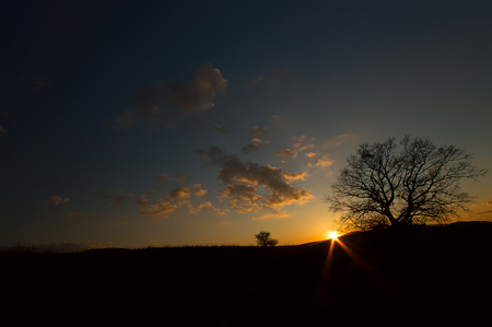 Silhouette tree with sunset