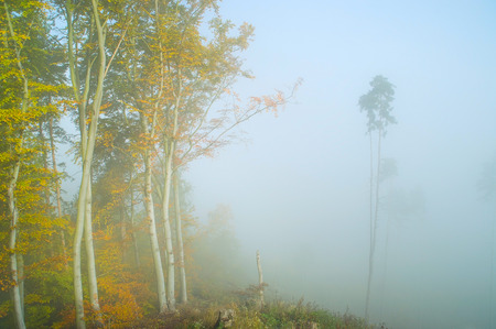 forest in fog in autumn