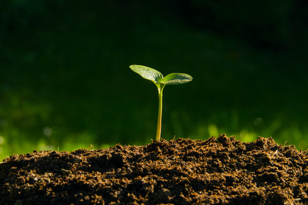 enviro: plant germinate from the ground