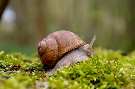 Snail in the moss Standard-Bild