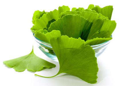 Ginkgo biloba leaves in a glass bowl. Green leaves on a white background. Stock Photo