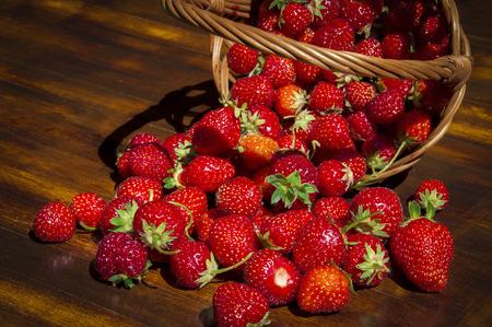 Freshly picked fruits of strawberries in a reversed wicker basket, sprinkled on a wooden table Standard-Bild