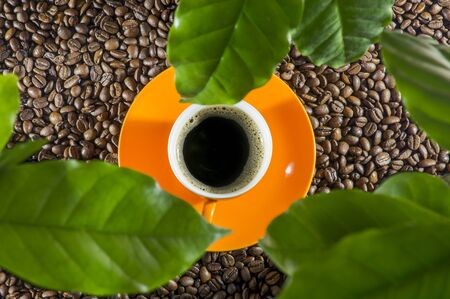 A view of a cup of coffee over green leaves of a coffee plant. Orange cup on coffee beans. View from above. 写真素材