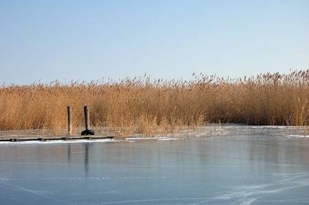 Reed in Frozen Lake in Austria  photo